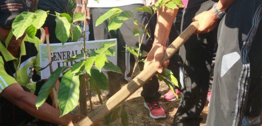 Hari Menanam Pohon Indonesia 2018, PLN Tanam 22.000 Pohon
