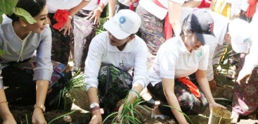 Ny. Putri Suastini Koster: Hijaukan Natah Rumah dengan Tanaman Sayur dan Obat-obatan