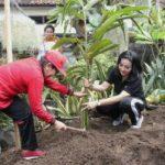 Dukung Program Nangun Sat Kerthi Loka Bali, Ny. Putri Suastini Koster Sosialisasikan HATINYA PKK di Denpasar
