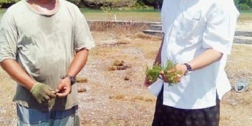 """Pariwisata Melesu, Ngurah Ambara: """"Budidaya rumput laut jadi penyelamat ekonomi"""""""