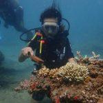 """""""Pemuteran Bay Festival 2020"""", Sebuah Dedikasi Anak Negeri untuk Penyelamatan Lingkungan"""