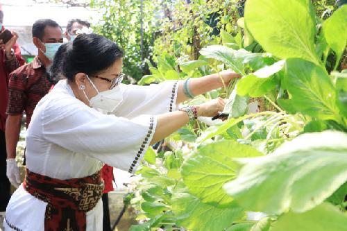 Tingkatkan Komoditi Pertanian Lokal Bali, Ny. Putri Koster Harapkan BPTP Kembangkan Bawang Putih Asli Bali