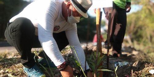 "Bersama Walikota, Gus Adhi ""Amatra"" Reboisasi Kawasan Mangrove Desa Adat Kepaon"