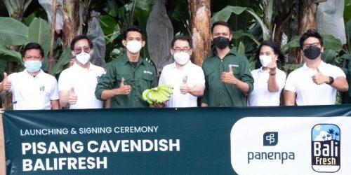 "Angkat Komoditas Lokal, Panenpa dan Sewu Segar Nusantara Kolaborasi Berdayakan Pisang Cavendish ""Bali Fresh"""