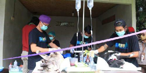 "Menuju Bali ""Bebas Rabies"", Vaksinasi Untuk Puluhan Ribu Anjing Digencarkan"